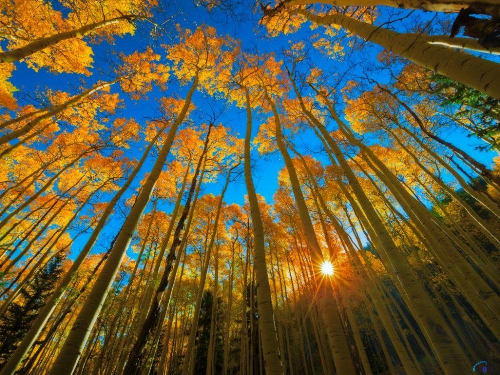 autumn trees scene