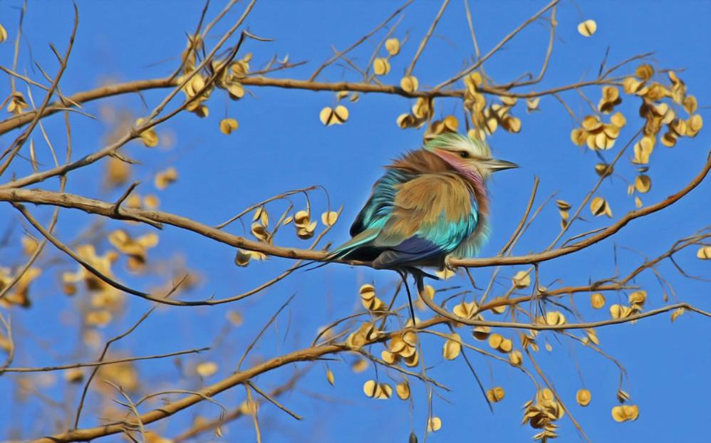 autumn sky bird feature