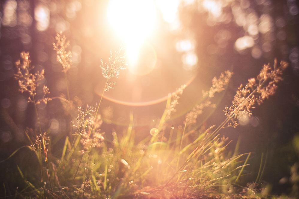 morning forest grass sunrise sunrays