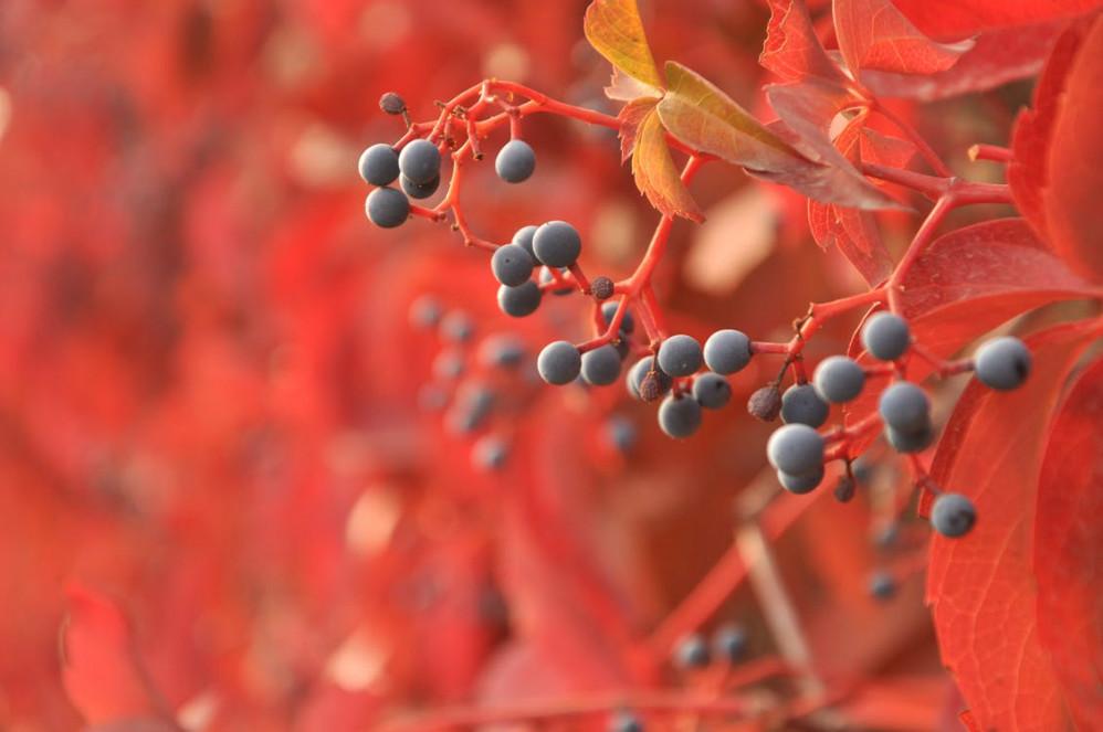 autumn feature scene red