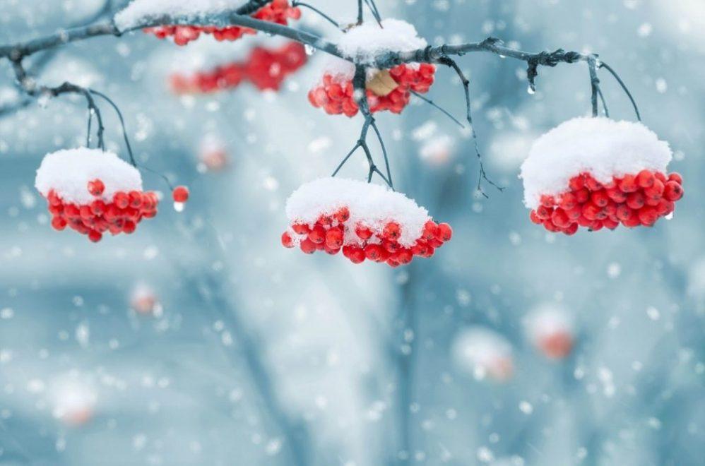 feature winter scene