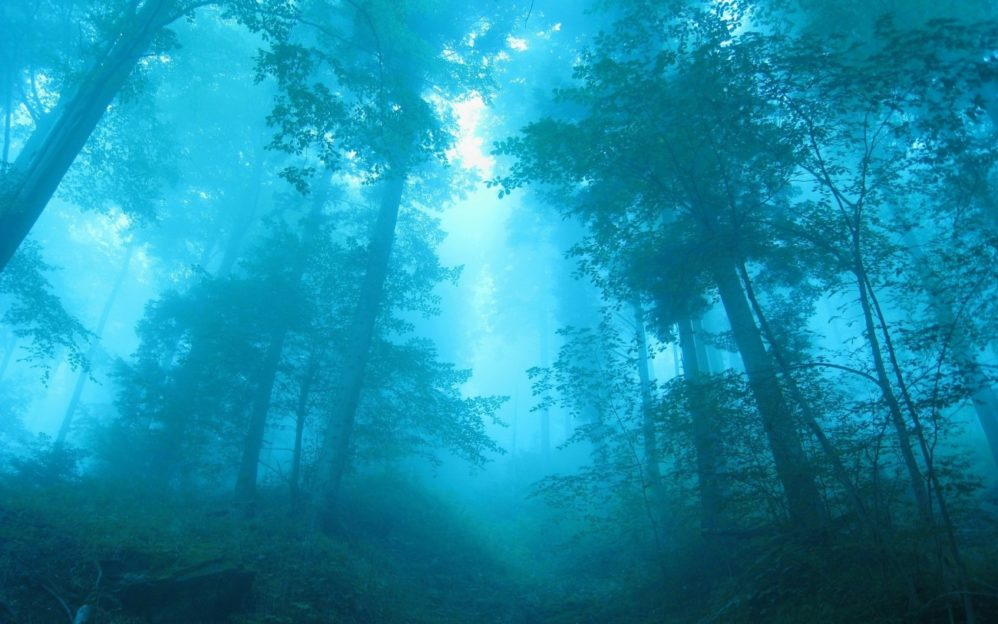 trees-forest dark woods