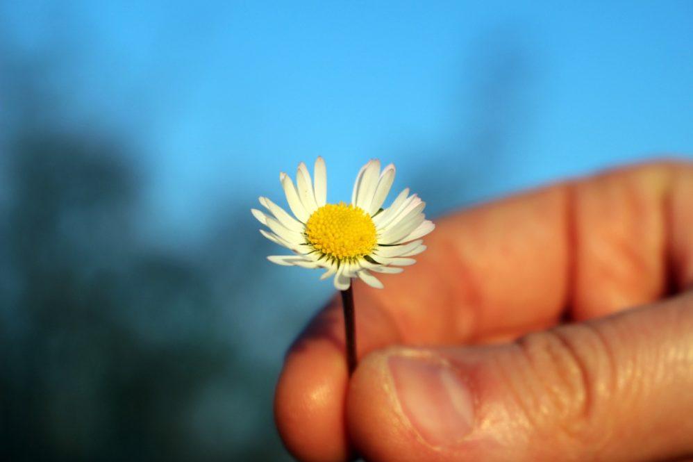 thanks flower gratitude daisy