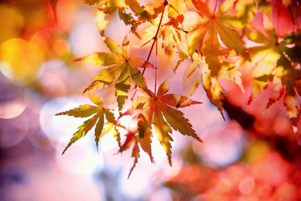 autumn leaves feature